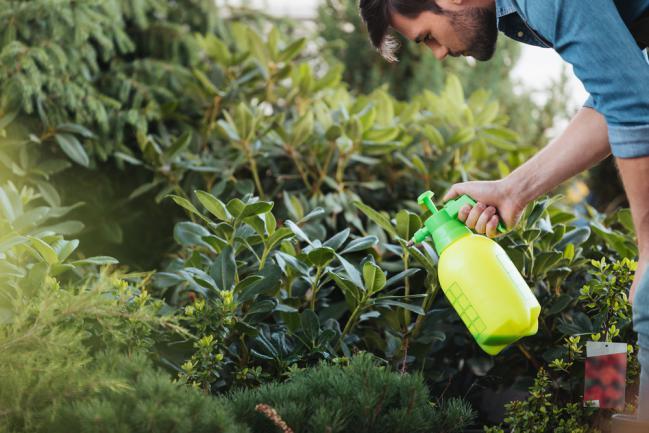 Pulvérisation à la base des plantes