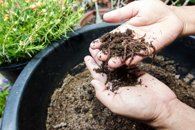 Réintroduire des vers de terre dans le jardin