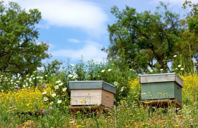 Ruches pour abeille