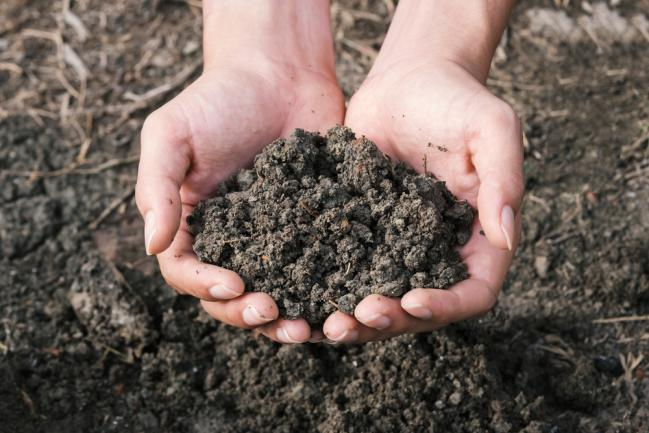 Sol reconstitué et contrôlé écologiquement pour la plantation
