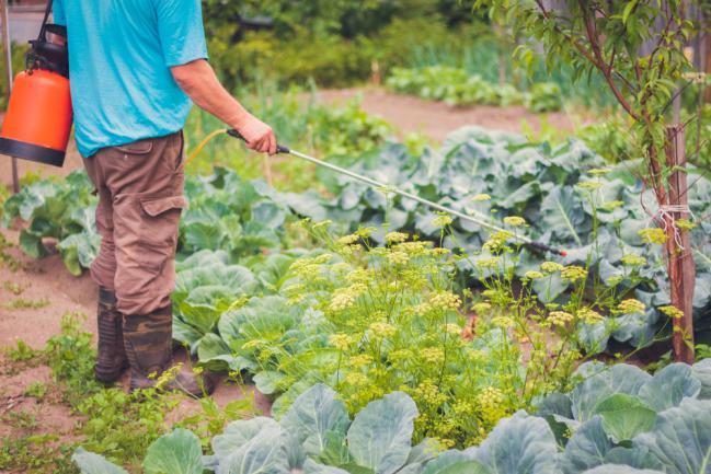 Traitement des ravageurs de légumes