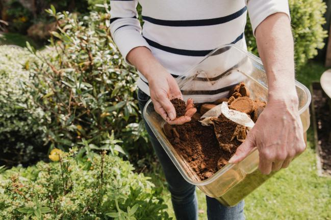 Utilisation du marc de café dans le jardin