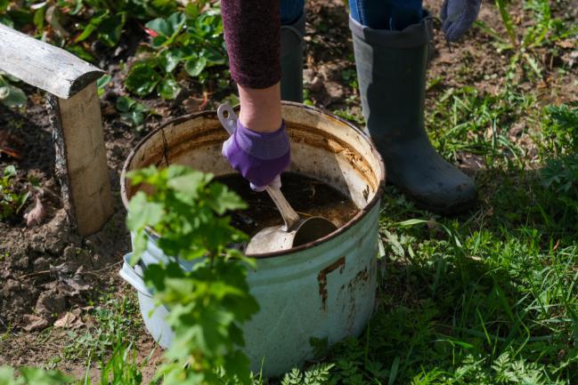 Utiliser le purin d'ortie comme fertilisant