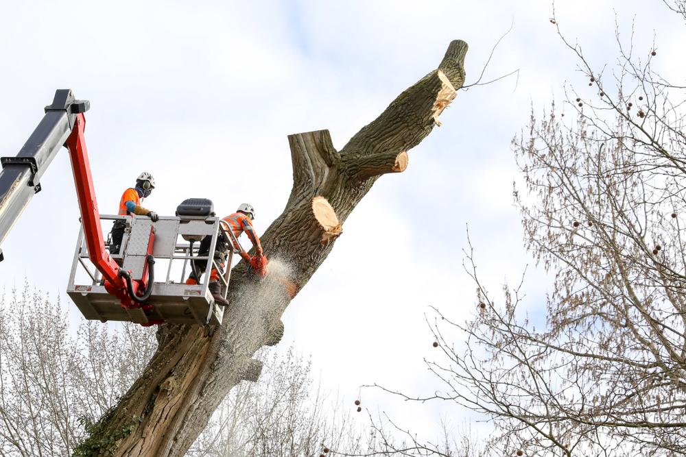 Abattage d'arbre utilisant une nacelle