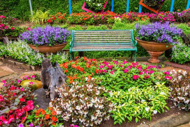 Massifs fleuris autour d'un banc