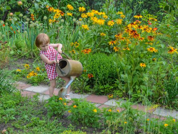 Planter des rudbeckia